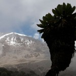Kilimanjaro, Africa